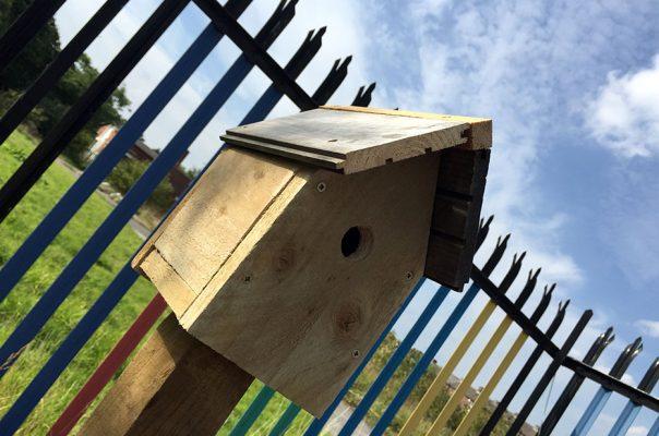 Greenhouse - Bird Box
